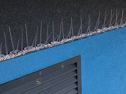 schools-wall-after-pigeon-spikes